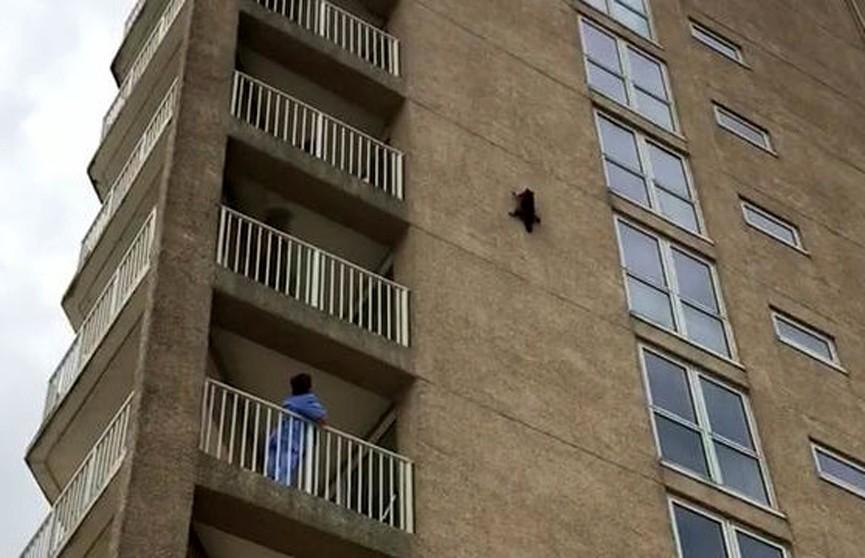 Енот упал с девятого этажа и выжил, несмотря на большую высоту