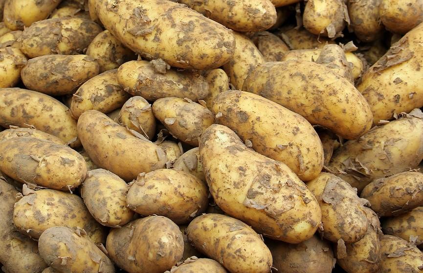 Чтобы не проросла! Рядом с чем категорически нельзя хранить картошку