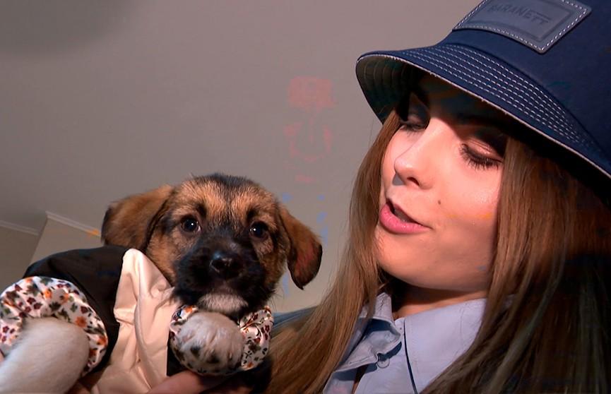 Самое трогательное дефиле: участницы конкурса «Мисс Беларусь» вышли на подиум с бездомными животными