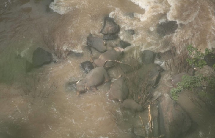 В Таиланде пять слонов погибли, спасая слоненка