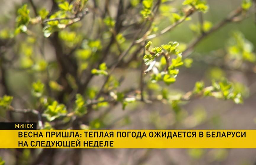 Теплая погода ожидается на следующей неделе в Беларуси