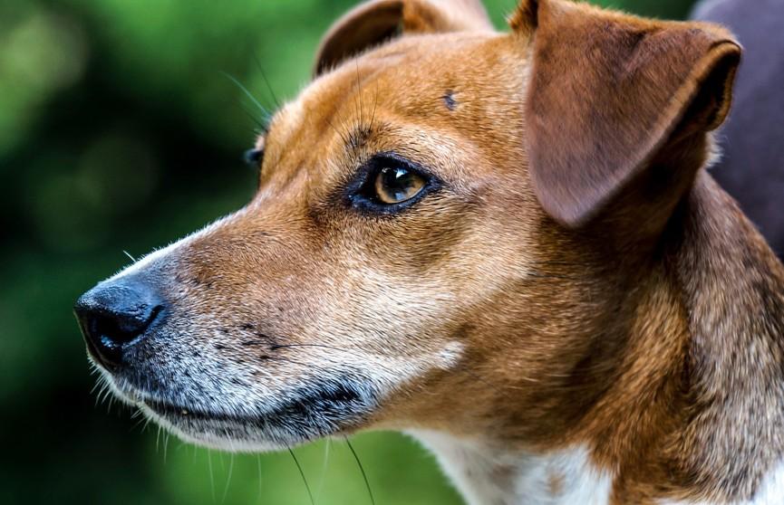 Противораковая вакцина для собак может помочь людям