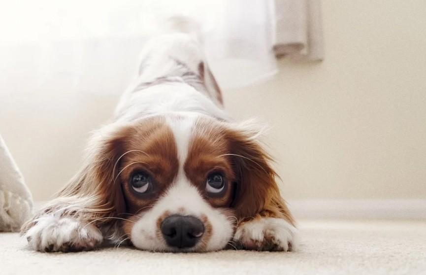 Собаку посадили в манеж, но она нашла чем заняться. Посмотрите, что придумала питомица, чтобы не скучать! Удивительно и как весело! (ВИДЕО)