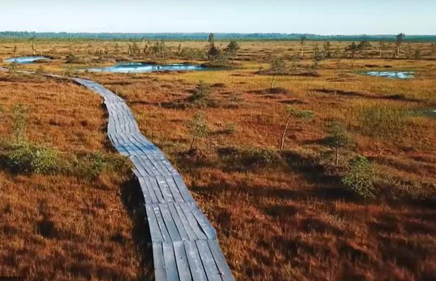 Фильм о самом большом болоте в Беларуси покажут онлайн