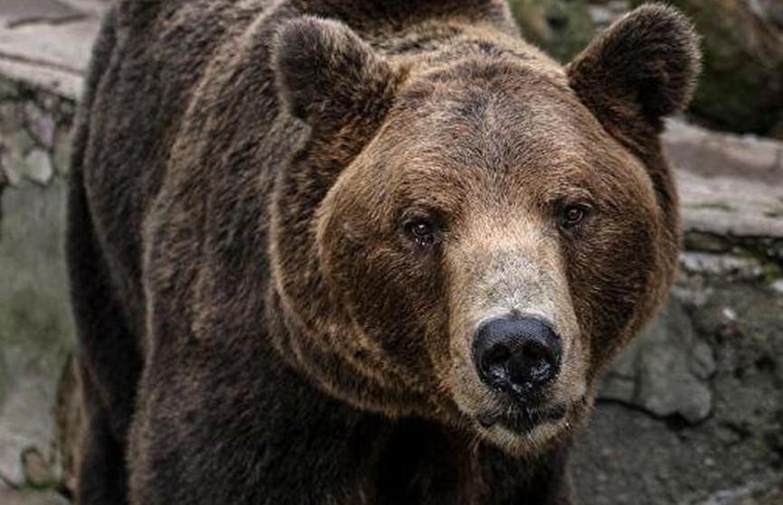 Американец подрался с медведицей, защищая свою собаку
