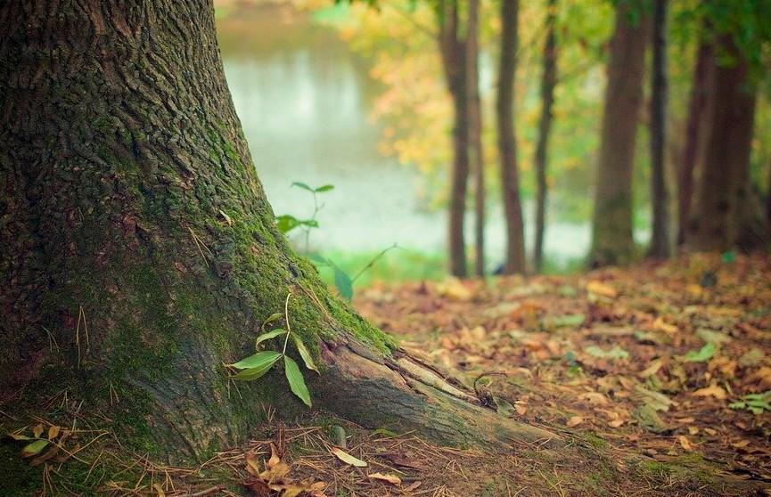 В Пуховичском районе школьница поехала на велосипеде в лес и заблудилась