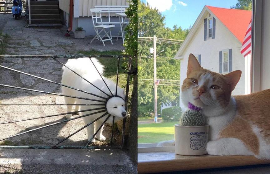 Это очень смешно! Фотографии котов и собак, которые попали в нелепые ситуации и ни капли не смутились