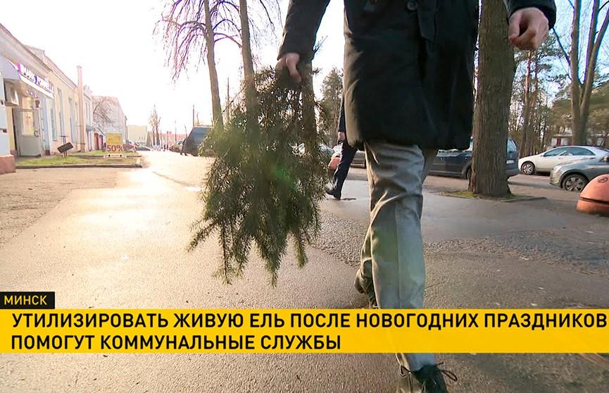 Коммунальщики помогут минчанам утилизировать новогодние елки