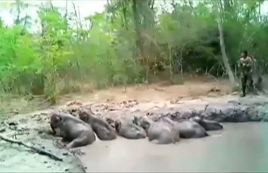 Шесть слонят провалились в яму и не могли выбраться в Таиланде