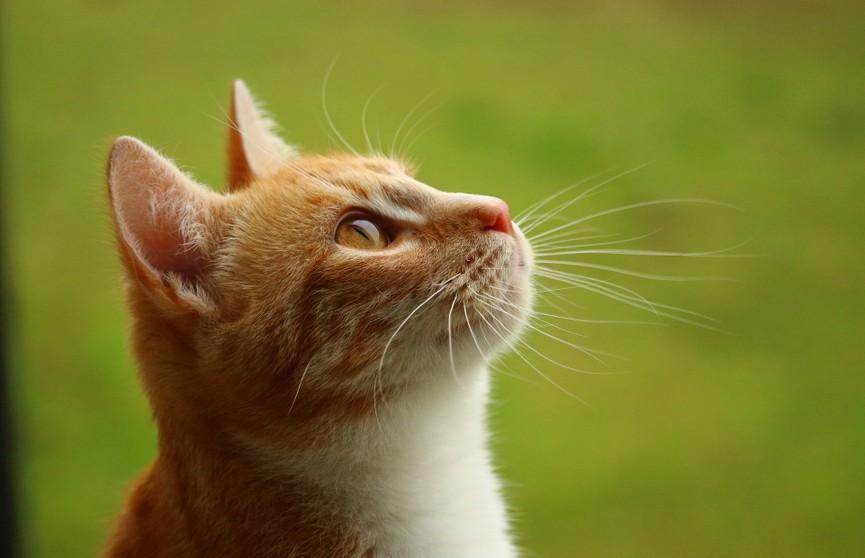 Реакция кошки на танцы хозяйки заставила хохотать соцсети. Только посмотрите на это!