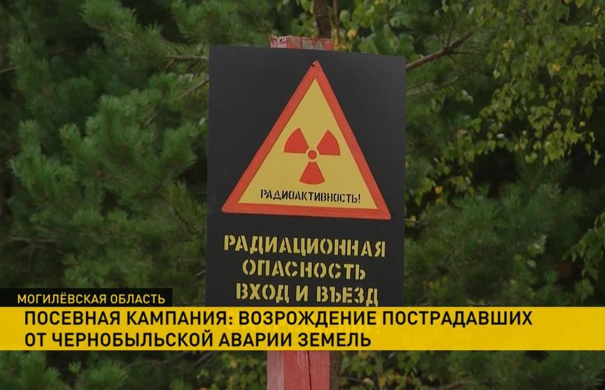 Как в Могилевской области возрождают земли, пострадавшие от Чернобыльской АЭС