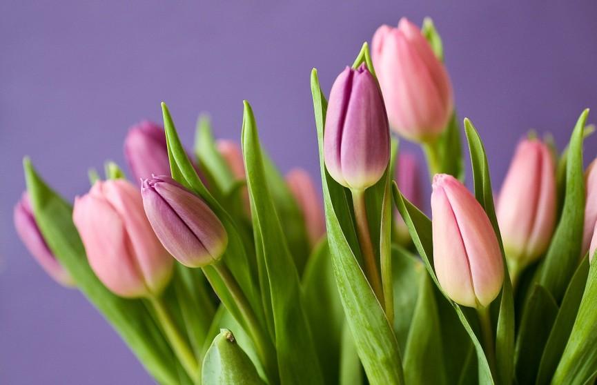 Как правильно выбрать свежие цветы? 5 важных критериев