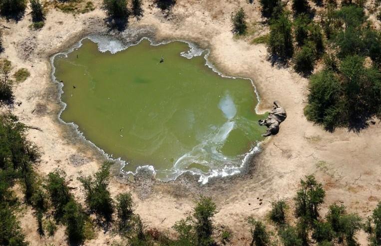 Названа вероятная причина массового вымирания слонов в Южной Африке