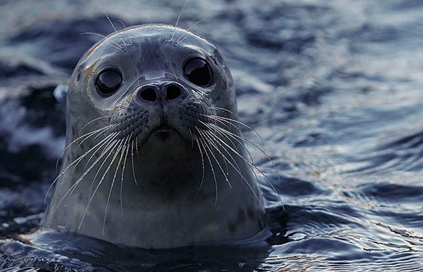 Дружелюбный тюлень пытался поплавать на байдарке (ВИДЕО)