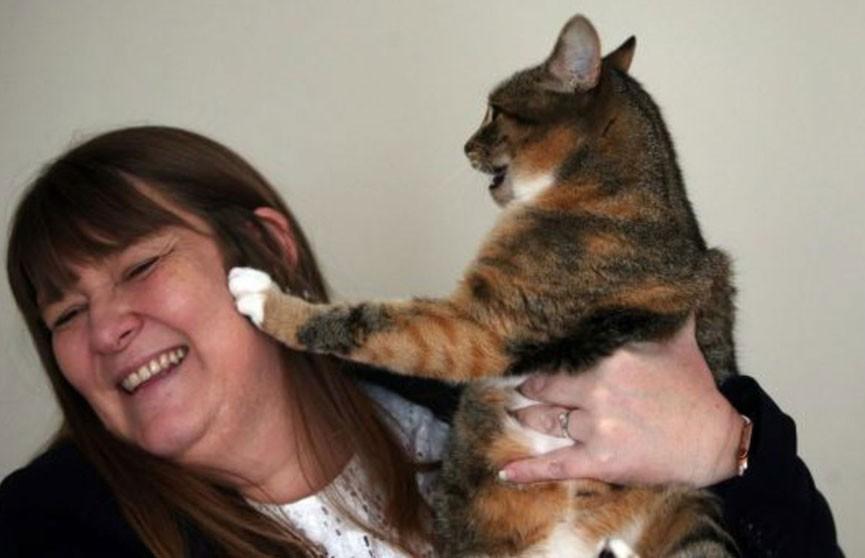 Кошка помогла обнаружить рак у хозяйки в Великобритании