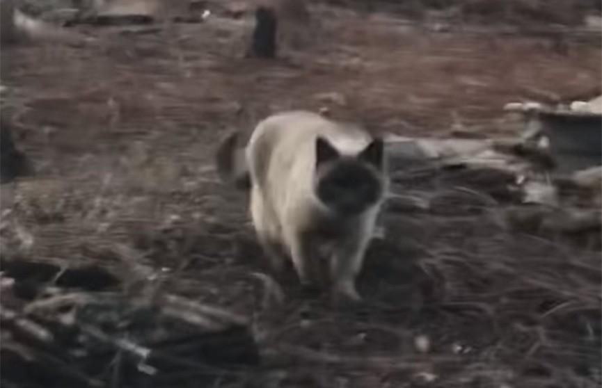 Семья из Калифорнии нашла кошку живой на руинах дома спустя месяц после жуткого пожара