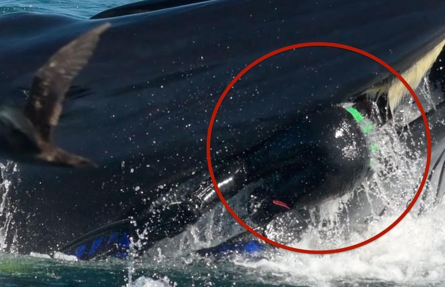 Дайвер побывал в пасти кита и выжил. Не для слабонервных!