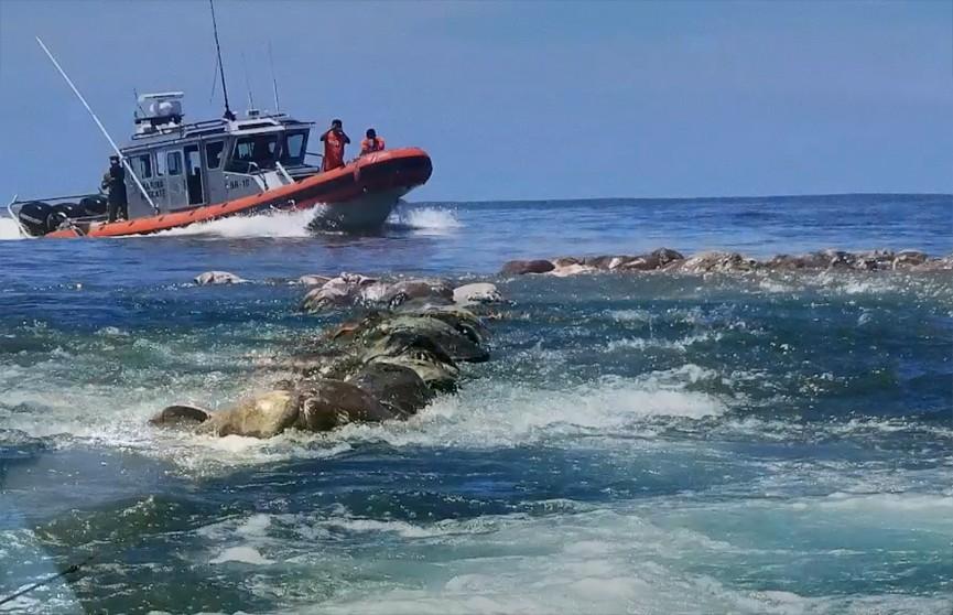 300 редких оливковых черепах погибли у побережья Мексики