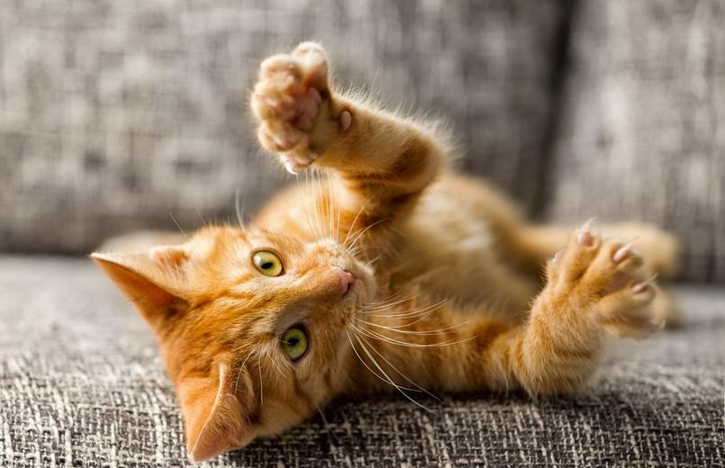 Кот устроил разборки с соседом и заставил хохотать всех (ВИДЕО)