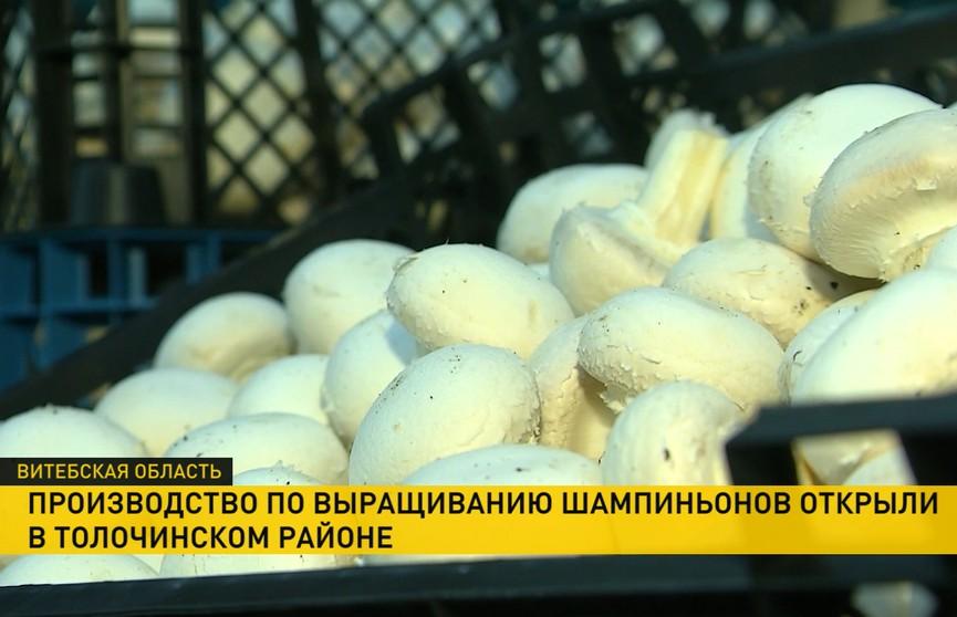 Новое сельхозпроизводство открыли в Толочинском районе