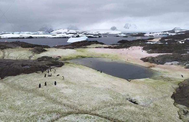 Снег в Антарктиде окрасился в зеленый и малиновый цвета