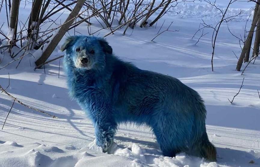 В России обнаружили стаю бездомных собак голубого цвета