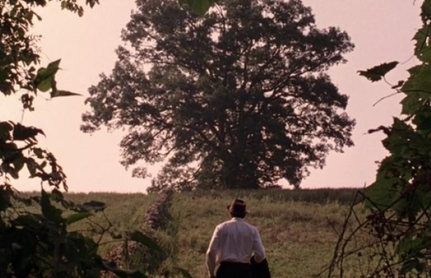 Дуб из фильма «Побег из Шоушенка» распилили на сувениры