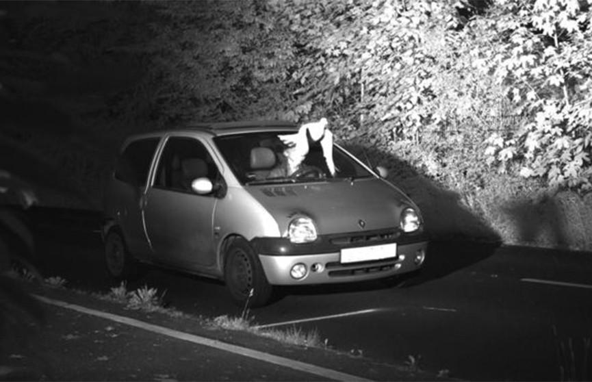 Голубь уберёг водителя от штрафа