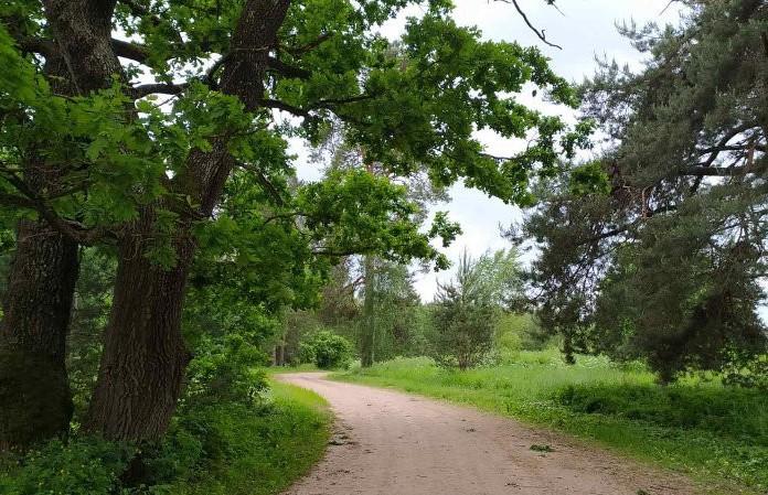 Ограничения и запреты на посещение лесов вводятся в 91 районе Беларуси