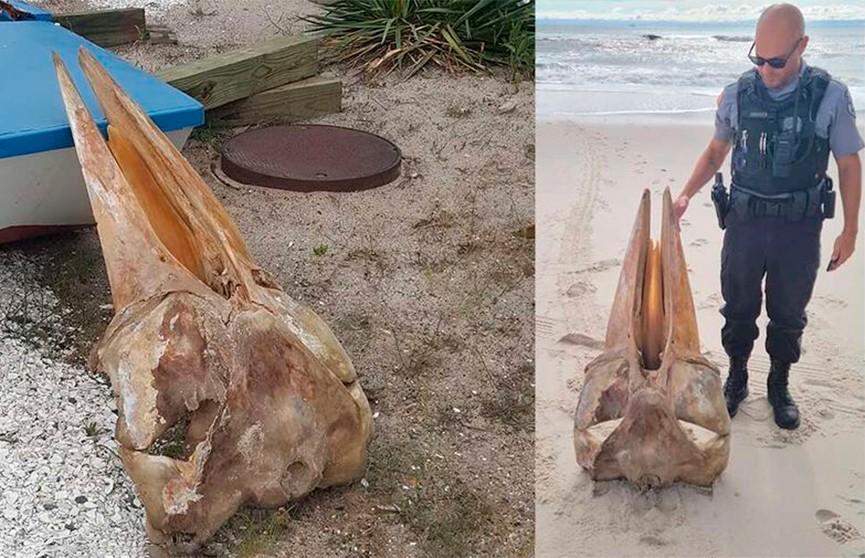 Гигантский череп в половину человеческого роста выбросило на берег в США