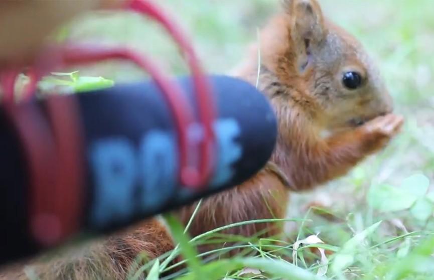 Зоолог записала звуки, которые издает 2-месячный бельчонок (ВИДЕО)
