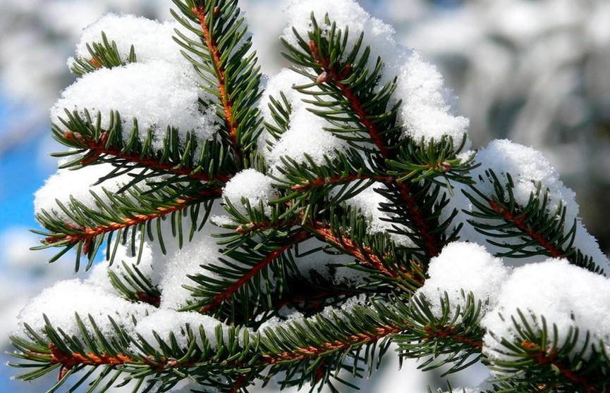 Какой будет погода в январе? Прогноз Дмитрия Рябова