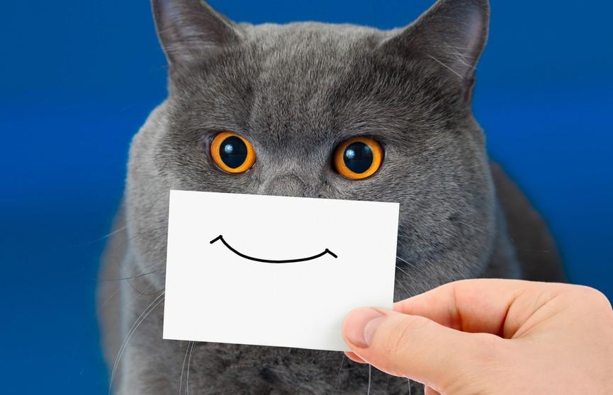Кот похвастался накачанной мышцей и рассмешил всех до слез (ВИДЕО)