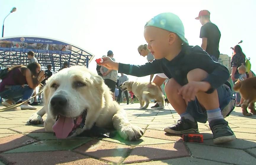 День защиты бездомных животных: в Бресте прошел благотворительный  зоозабег