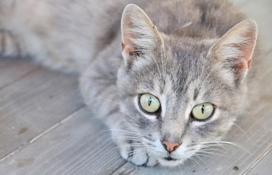 Кошка, как и многие дети, любит одну известную мелодию! Посмотрите, что она делает, когда слышит ее! (ВИДЕО)