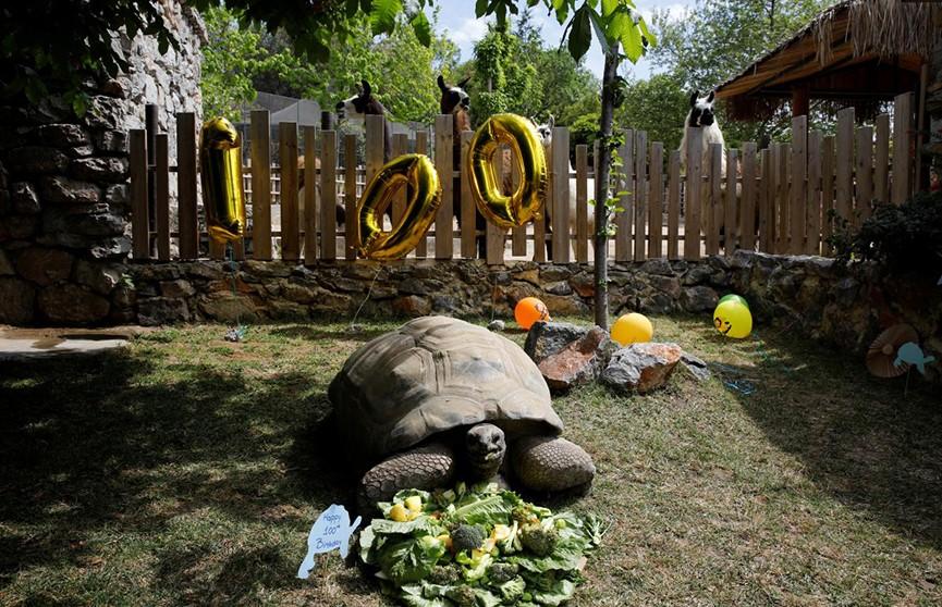 Черепахе-предсказательнице исполнилось 100 лет