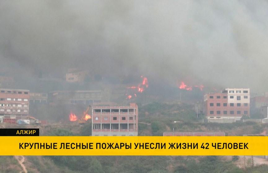 Крупные пожары в Алжире: есть погибшие