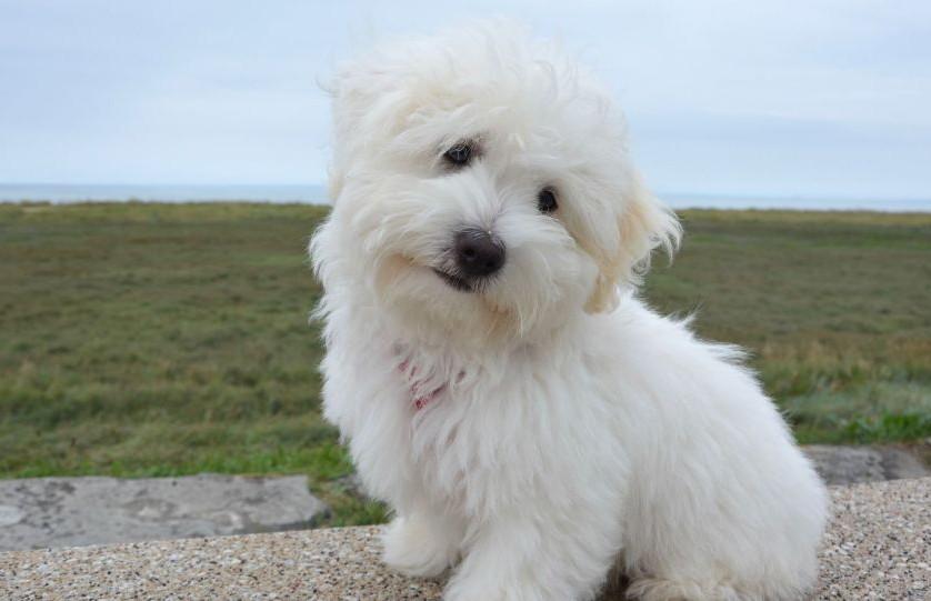 Греческий Хатико: верный пёс полтора года живёт у дороги, где погиб хозяин