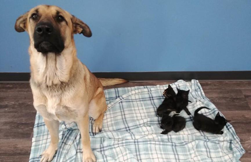 Бездомная собака спасла пятерых котят от смерти на морозе