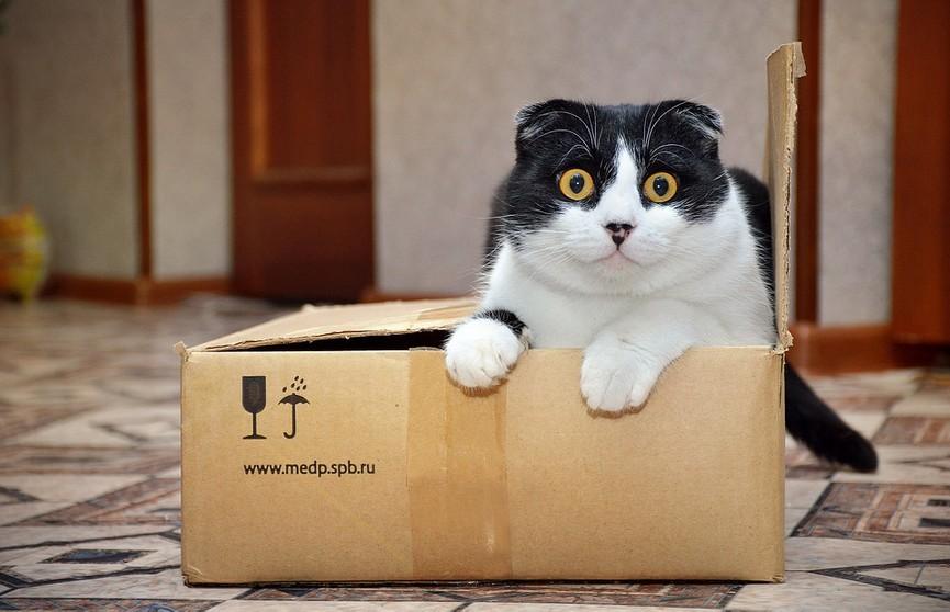 Ученые рассказали о любви кошек к воображаемым коробкам