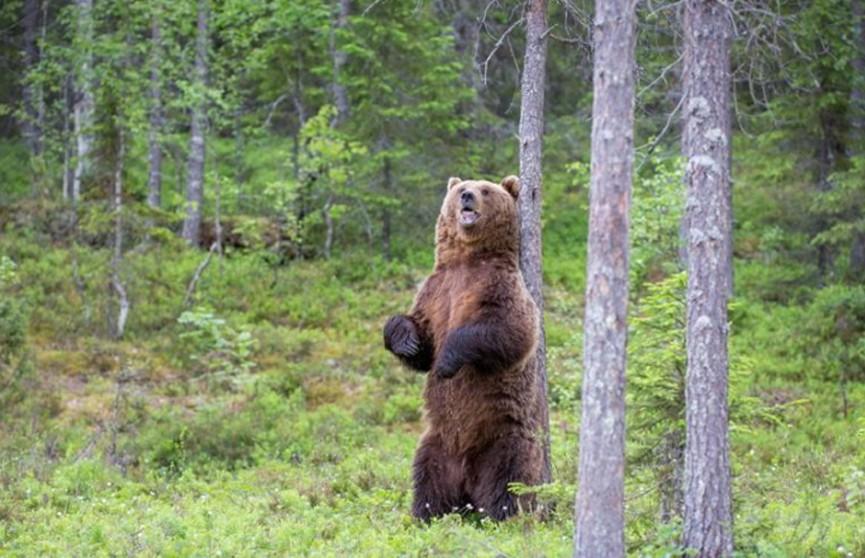 Медведь напал на женщину с ребёнком в Канаде: они погибли