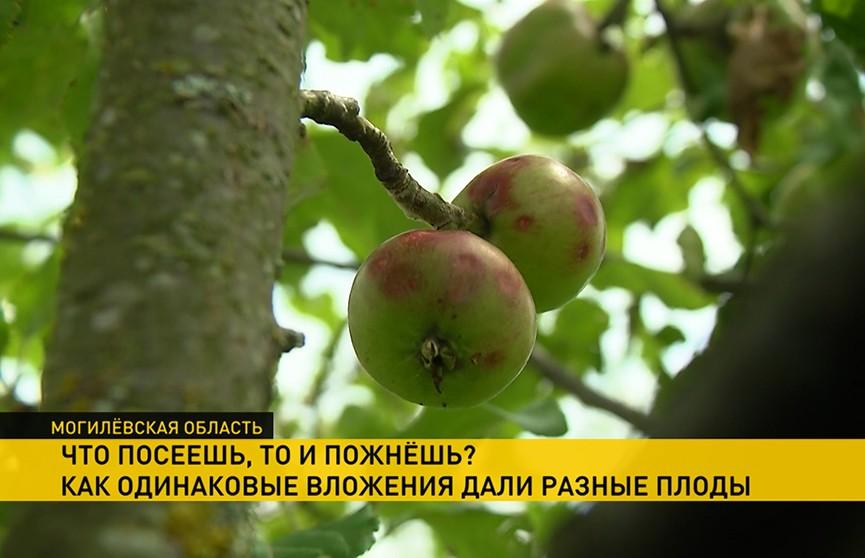 Одни предприятия работают, другие – терпят убытки: Госконтроль изучил развитие плодоводства в Могилевском регионе
