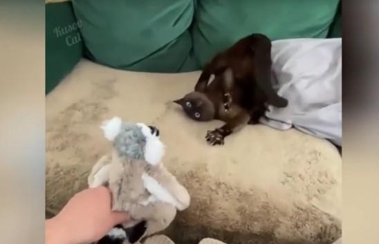 Пора вызывать экзорциста? Очень странная реакция кота на игрушку заставила хохотать соцсети