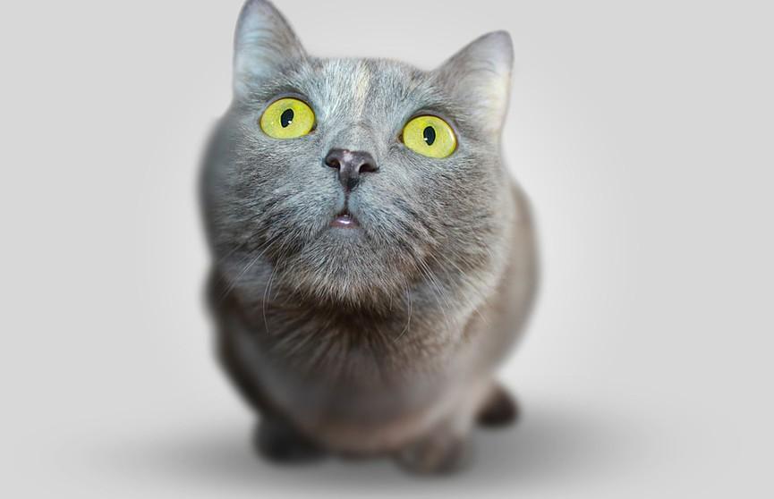 «Это я пытаюсь сбежать от проблем»: неудачная попытка кошки украсть куриное мясо до слез рассмешила Сеть