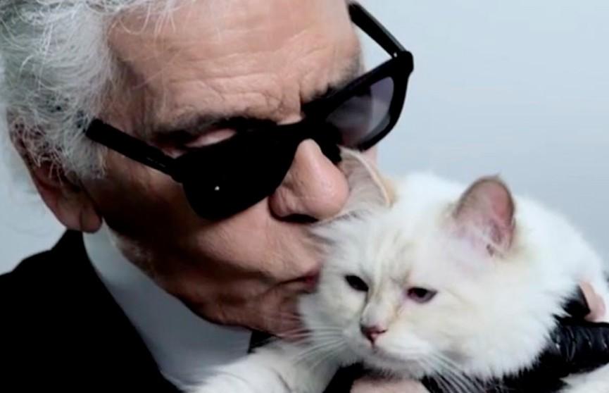 Состояние Карла Лагерфельда может по наследству перейти его кошке