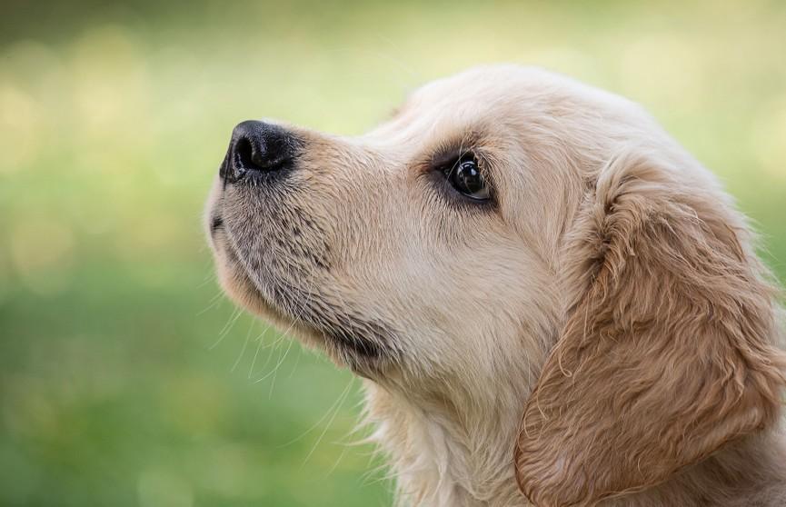 «Давай заведем собачку»: парень показал, во что щенок превратил квартиру