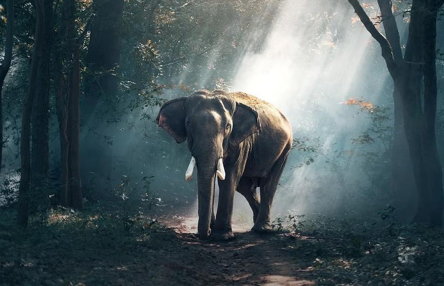 Дикий слон набросился на полный пассажиров автобус и попал на видео