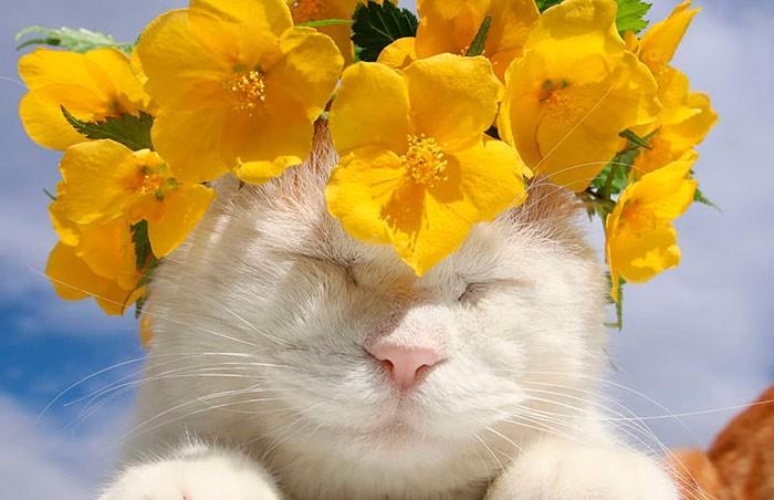 Кот, постигший дзен: в Японии умер самый спокойный в мире кот