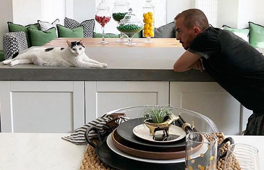 Дом был – дома нет. Кошка затопила дом американского ведущего