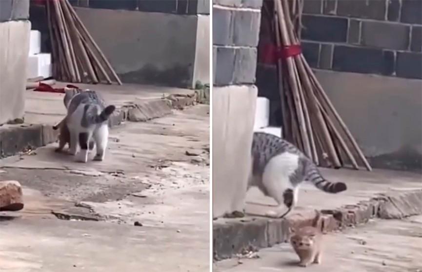 «Я не нагулялся»: сбежавший от мамы непослушный котенок рассмешил Сеть